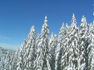 snowy-woods-1148581-m