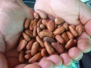 cacoa-beans